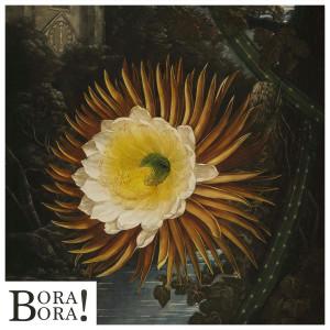 02.24.SOUND.ROGUESOUNDS.BoraBora.ART