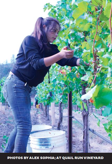 wineries2