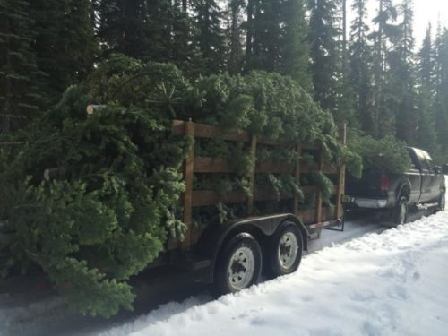 Christmas Trees in the Rogue Valley